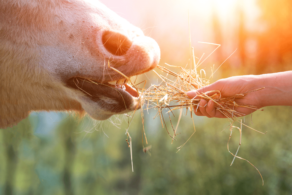 Working with Horses and Children: Let's Break Away from Tradition