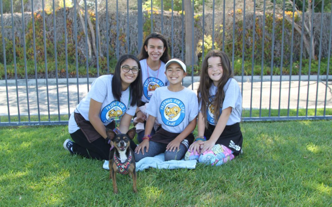 Selecting Shelter Dogs for Education Programs