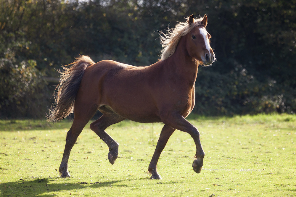 Case Study: Human Directed Aggression in a Horse