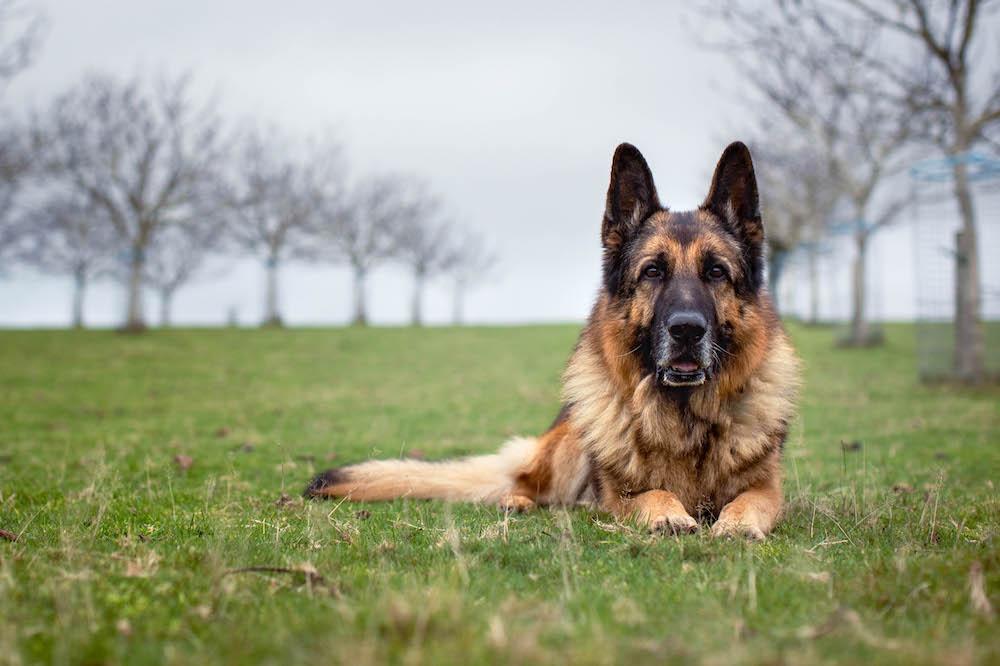 Behavioural Care of the Elderly Farm Dog Retired (or Not) from Work