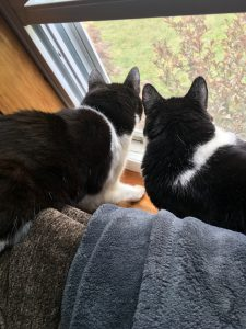 Two cats lying together and looking out of a window onto a garden